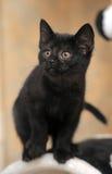 黑色逗人喜爱的小猫 库存图片