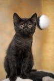 黑色逗人喜爱的小猫 免版税库存照片