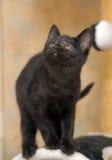 黑色逗人喜爱的小猫 图库摄影