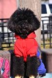 黑色逗人喜爱的狗一点 免版税库存照片