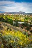 黄色遥远的山和河沿花和看法  免版税库存照片