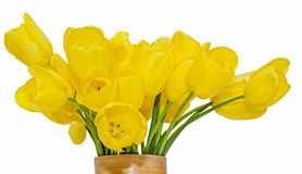 黄色郁金香在一个充满活力的色的花瓶,关闭开花,被隔绝的,白色背景 库存图片