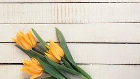 黄色郁金香在白色被绘的木板条开花 库存图片
