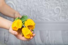 黄色郁金香在他的手上 库存照片