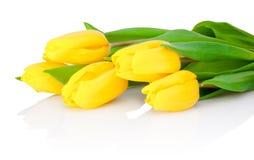 黄色郁金香花在白色背景被隔绝 免版税库存照片