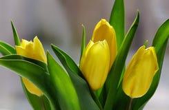 黄色郁金香花束 库存照片