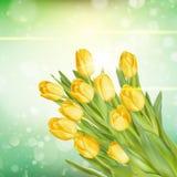 黄色郁金香花束 10 eps 图库摄影