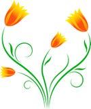 黄色郁金香,橙色郁金香,开花例证 库存图片