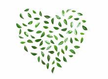绿色重点叶子 免版税库存图片