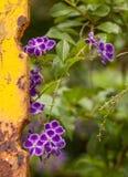 紫色野花和生锈的黄色篱芭酒吧 库存照片