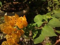 黄色野花在后院庭院里 免版税图库摄影