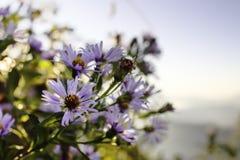 紫色野花灰色天空 库存图片