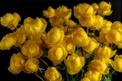黄色野花花束金莲花europaeus 免版税库存照片
