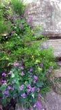 紫色野花 免版税库存照片