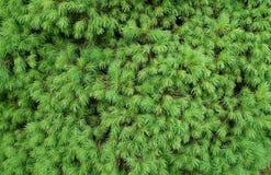 绿色针纹理 库存照片