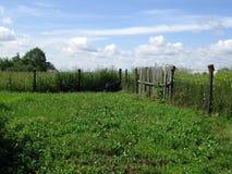 绿色长满的庭院 免版税库存照片