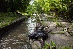 绿色附注污染水 在都市小河银行的垃圾 免版税库存照片