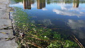绿色附注污染水 干燥气候灾害自然泰国 股票录像