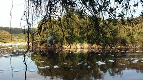 绿色附注污染水 免版税图库摄影