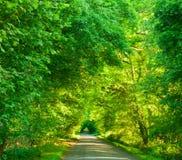 绿色隧道路 免版税库存照片