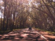 绿色隧道路 库存照片