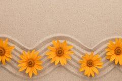 黄色雏菊框架在波浪沙子的 美丽的照片 免版税库存图片