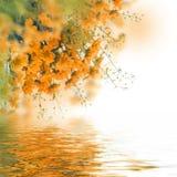 黄色雏菊 库存图片