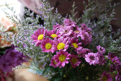 紫色雏菊 免版税库存图片