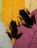 绿色雨蛙窗口购物 库存图片