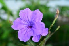 紫色雨 免版税库存照片