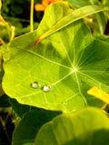 绿色雨 免版税图库摄影
