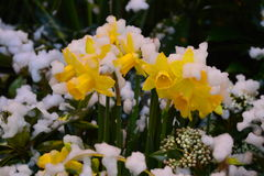 黄色雪 免版税库存照片