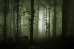 绿色雾在自然森林里 免版税库存照片