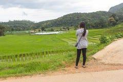 绿色露台的米的亚裔妇女调遣, Mae巴生Luang清迈 图库摄影