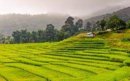 绿色露台的米领域在Chiangmai,泰国 免版税图库摄影