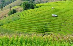 绿色露台的米领域 免版税库存照片