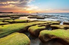 绿色青苔和日落背景 免版税图库摄影