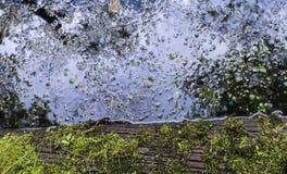 绿色青苔和池塘水反射 图库摄影