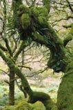 绿色青苔在Dartmoor 库存图片