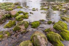 绿色青苔岩石 免版税库存照片