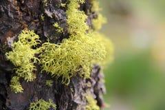 绿色青苔树干 免版税库存照片
