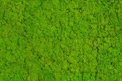 绿色青苔背景,生苔纹理 免版税图库摄影