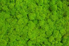 绿色青苔背景,生苔纹理 库存图片