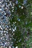 绿色青苔背景 无缝的Tileable纹理 库存图片