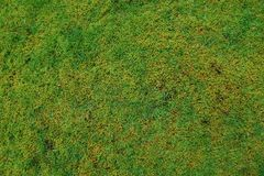 绿色青苔自然背景 库存图片