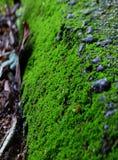 绿色青苔冻结的草地 免版税库存图片