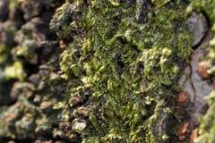 绿色青苔细节 库存图片