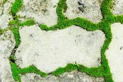 绿色青苔 库存图片