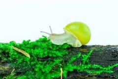 绿色青苔 图库摄影