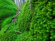 绿色青苔 库存照片